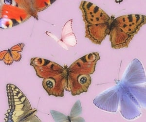 butterfly, blue, and brown image