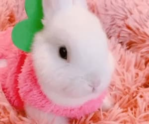 animal, gif, and strawberry image