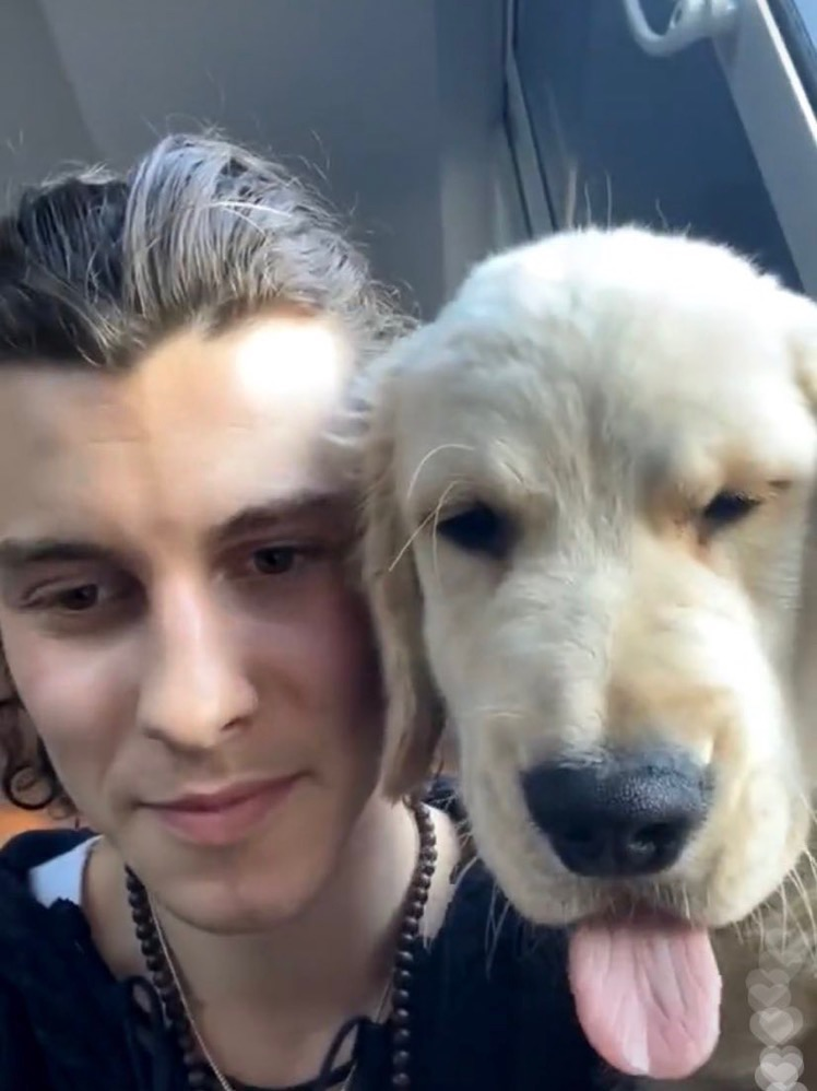 dog, tarzan, and live image