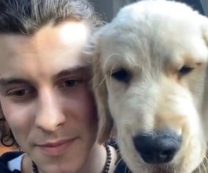 dog, tarzan, and insta image