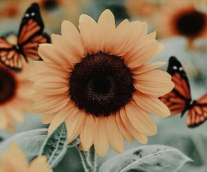 aesthetic, flower, and natur image