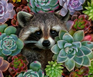 animal, raccoon, and nature image