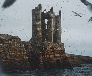 bird, castle, and landscape image