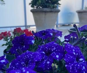 aesthetic, garden, and petunia image