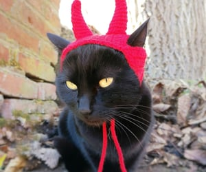 cats, gothic, and Halloween image