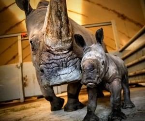 animals, momma, and rhinoceros image