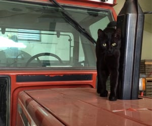 cat, fiat, and green eyes image