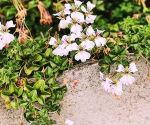 belgium, bloemen, and flower image