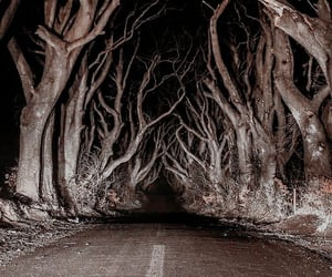 forest, horror, and terror image