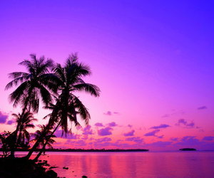 beach, purple, and summer image