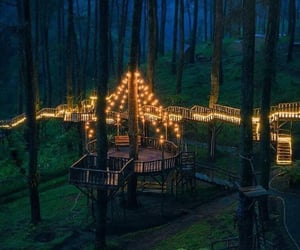 lights, forest, and nature image