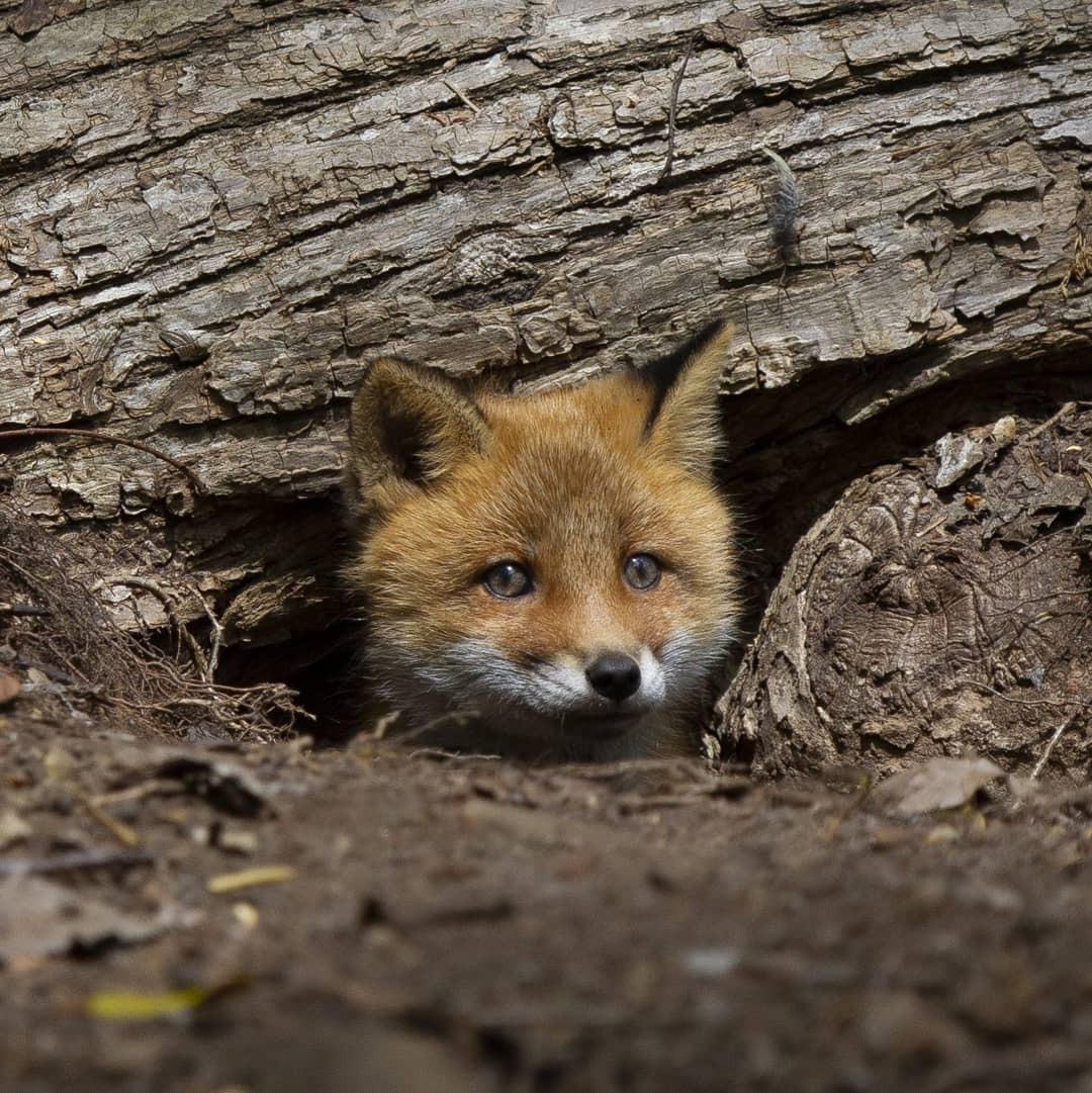adorable, wild animal, and pet image