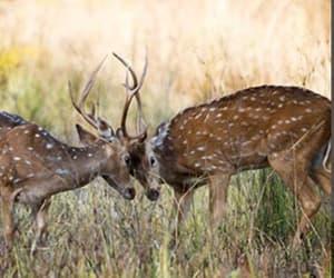 deer, deers, and doe image