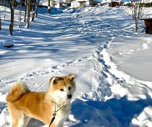 dog, akita, and instagram image