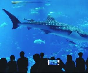 aquarium, japan, and okinawa image
