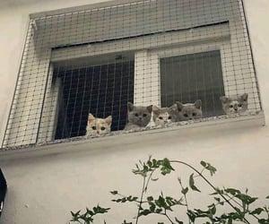 kittens -`ღ´-