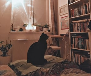 bedroom, books, and cat image