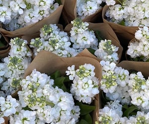 flowers and white flowers image