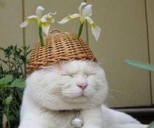cat meme image
