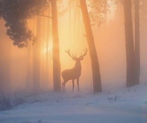 snow, deer, and forest image