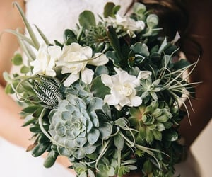 green, succulent, and bouquet image