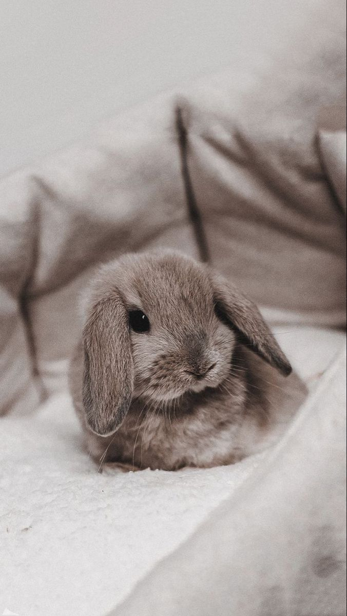 animals, bunny, and rabbit image