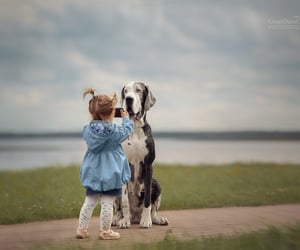 photography, funny dog, and kids photography image