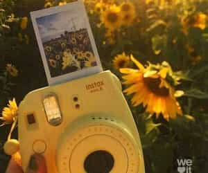 flower, camera, and yellow image