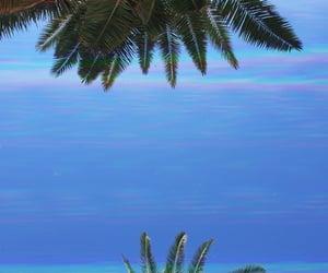 Croatia, frog, and palms image