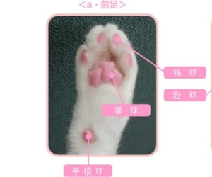 cat, pink, and header image