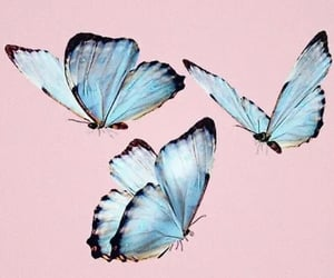 butterfly, blue, and overlay image