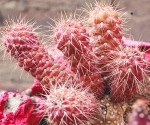 plantas, plants, and cactus image