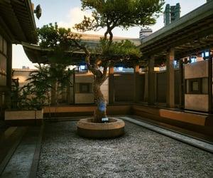 bonsai, zen, and calm image