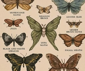 academia, butterflies, and butterfly image