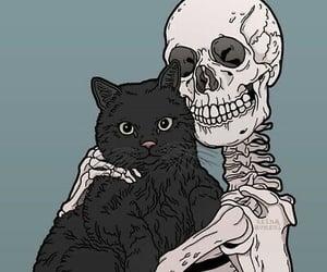 cat, skeleton, and black cat image