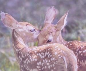 animals, bambi, and pink image