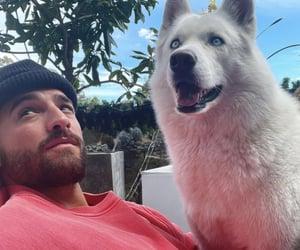 animals, husky, and pets image