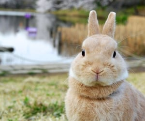 animal, rabbit, and sweet image