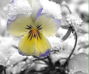 flowers and winter image