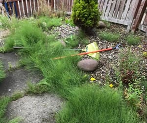 landscape gardeners fife, lawn care dunfermline, and pruning dunfermline image