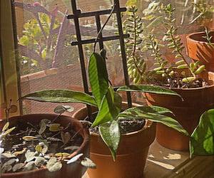 indoor plants, plants, and hoya image