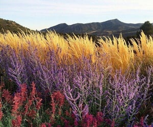 Beauty of wild flowers   @eve365