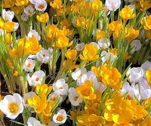 Flowers make world much more beautiful   @eve365