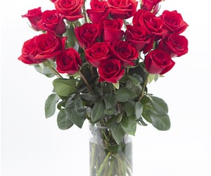 rose, Valentine's Day, and valentine's day 2021 image