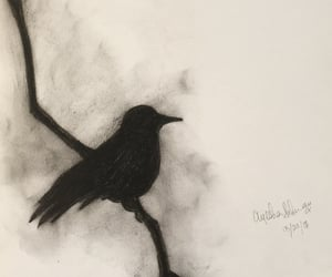 bird and charcoals image