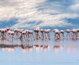 Flamingos by Sotiris G Siomis (Photoaenaos)