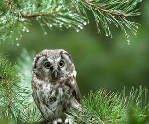 Owl by @irene__sieber