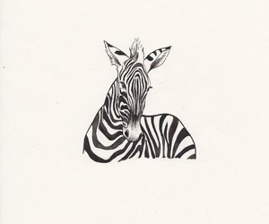 black and white, zebra, and art image