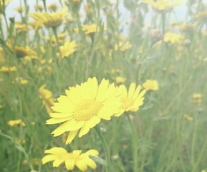 blooming, daisy, and field image