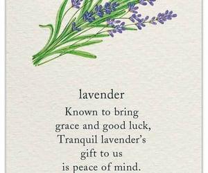 flowers, meanings, and lavander image